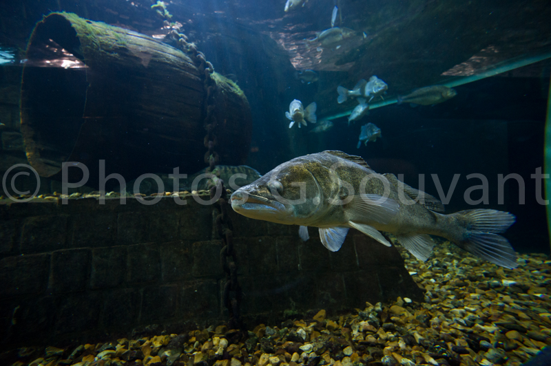aquarium de touraine photographe de l afp agence presse