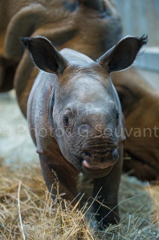 FRANCE-ANIMAL-ZOO-BIRTH