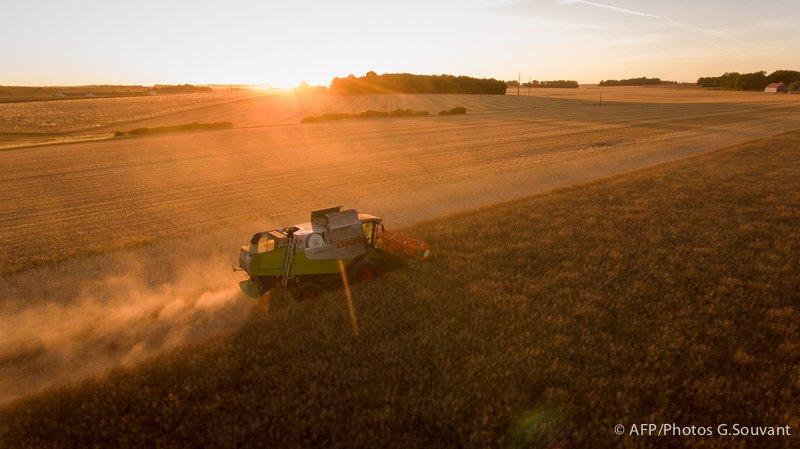 FRANCE - HARVEST - RAPE - AGRICULTURE - SUNSET - FEATURE