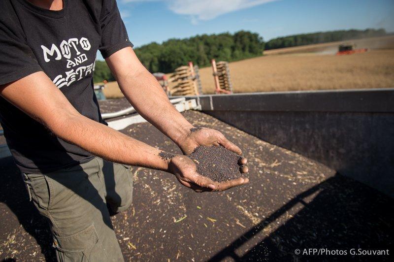FRANCE - HARVEST - RAPE - AGRICULTURE - FEATURE