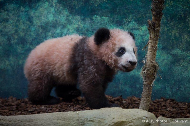 FRANCE-CHINA-PANDA-ANIMAL