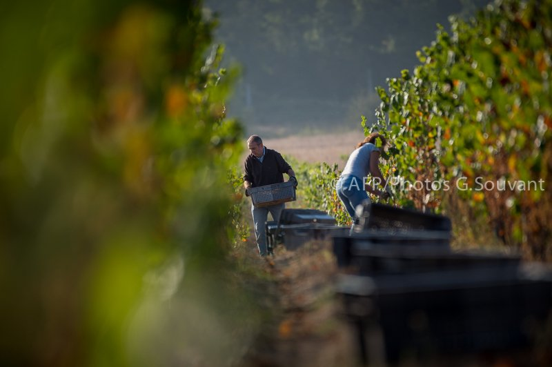 FRANCE-HARVEST-WINE-CHAMBORD